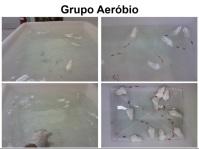 Mestrado - Master´s Degree - Rodrigo 2