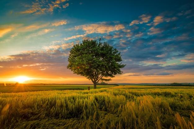 Esta imagem possuí um atributo alt vazio; O nome do arquivo é wide-angle-shot-single-tree-growing-clouded-sky-during-sunset-surrounded-by-grass_181624-22807.jpg